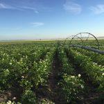 poplar bluff organics fields