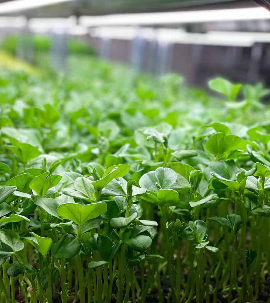 Read more about the article Micro Acres